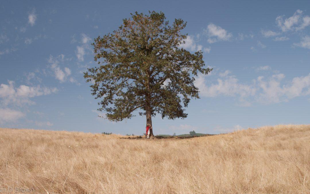The Flexible Oak